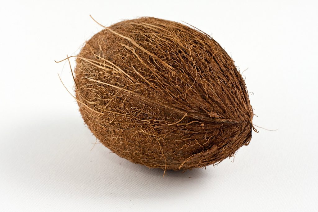 Brown coconut with dried outer layer and fibers sticking out. It has an oval shape with a soft lower shadow, on a white background.