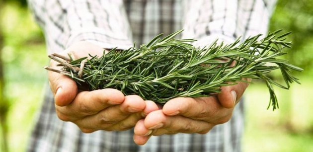 Scientists Discover Herb That Fights Dementia And Increases Memory By 75%