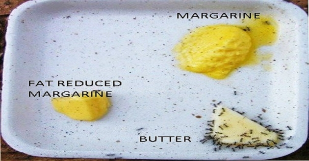 The FAT Facts: Butter vs Margarine