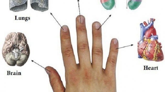 EVERY FINGER IS CONNECTED TO 2 ORGANS: JAPANESE METHODS OF CURING IN 5 MINUTES!