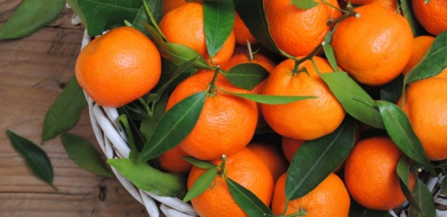 Never buy tangerines again! Plant them like this in a flower pot and you will always have hundreds.
