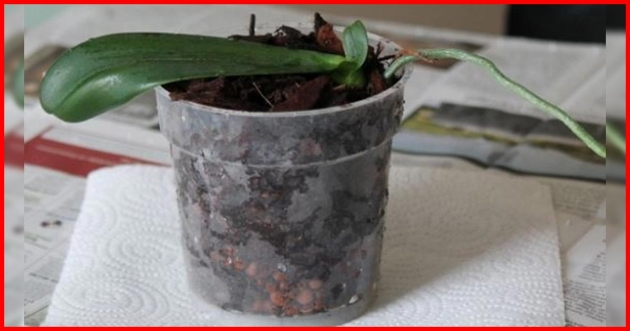 Is the Orchid Dead Yet? Here is The Secrets to rehabilitate your orchid