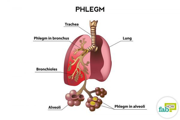 How to Get Rid of Phlegm and Mucus in Chest & Throat ...